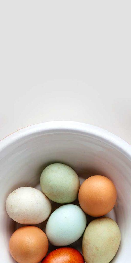 eggs 512x10241 1